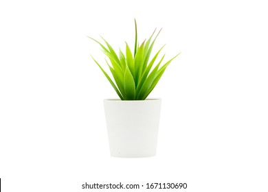 Indoor small green plant isolated on white