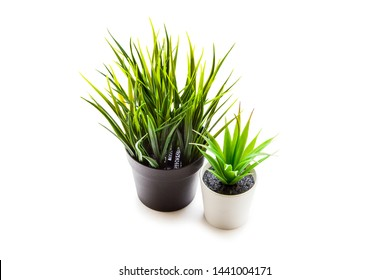 Indoor table plant isolated on white background