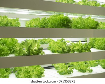 Indoor vegetable factory