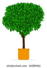 Indoor/outdoor tree - Ficus in pot