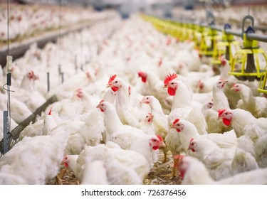 Poultry Farm Images, Stock Photos & Vectors | Shutterstock