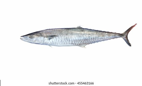 Indo-Pacific King mackerel On a white background . Spotted mackerel, Seerfish