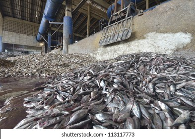 industrial fish meal