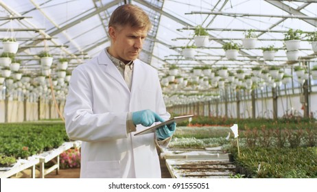 In the Industrial Greenhouse Agricultural Engineer Wearing White Coat Uses Tablet Computer to Test Plant's Health and Analyze Data with Tablet Computer.