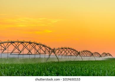Industrial irrigation of corn