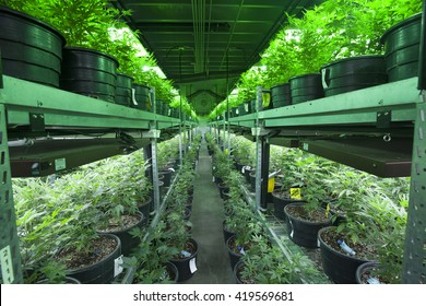 Industrial Marijuana Grow Operation