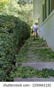 An industrious man prunes a hedge and leaves a long trail of leaf clippings behind him as he goes on a sunny summer day