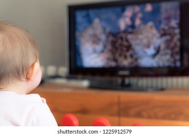 Infant baby girl watching documentary on TV.