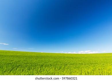 Infinite horizon rural fields in spring, with blue sky