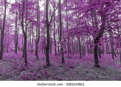 Infra red forest in purple colors