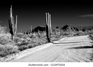 Infrared Early morning Sonora desert road with saguaro cactus