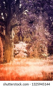 An infrared filtered textured photo of an area of ancient woodland in the UK