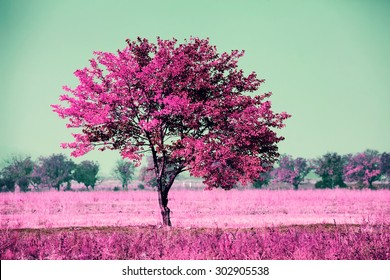 infrared landscape with alone tree in the field