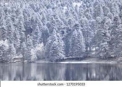 infrared photo tree amazing nature lake with reflection