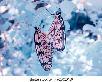 Infrared shot of butterflies, Tokyo, Japan. Taken with a specially modified camera. All light recorded is invisible to the naked eye.