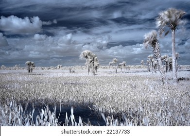 Infrared shot of Florida wetlands