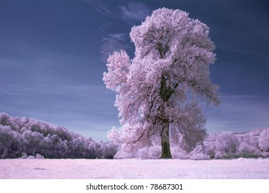 infrared tree on a white field and blue sky