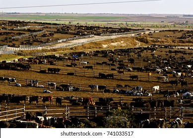 Ingalls, Kansas, USA, 24th October, 2014 Ingalls Feed Yard.is a feedlot type of animal feeding operation which is used in intensive animal farming for finishing livestock, notably beef cattle.