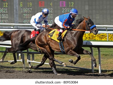 "INGLEWOOD, CA - JULY 9: Female jockey Chantal Sutherland and ""Game On Dude"" (No. 4)  compete in the Hollywood Gold Cup at Hollywood Park on July 9, 2011 in Inglewood, CA."