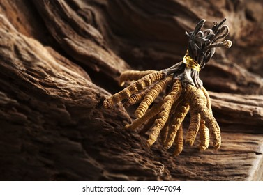 Ingredient used in Traditional Chinese Medicine isolated on white background - Cordyceps sinensis (caterpillar fungus)