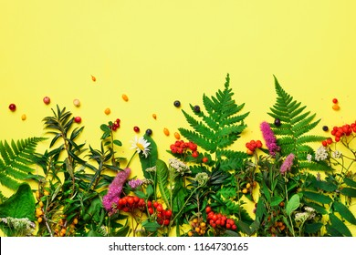 Ingredients of herbal alternative medicine, holistic and naturopathy approach on yellow background. Herbs, flowers for herbal tea. Top view, copy space, flat lay.