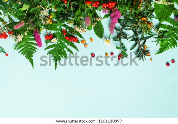 Ingredients of herbal alternative medicine, holistic and naturopathy approach on blue background. Herbs, flowers for herbal tea. Top view, copy space, flat lay.