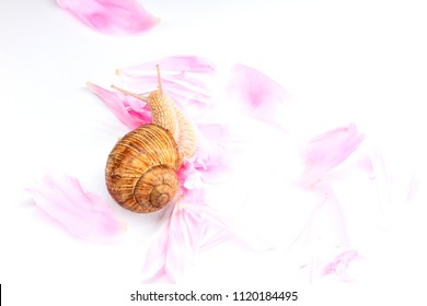 Ingredients of rejuvenating cream flowers and slime of snails, cosmetics and skin care