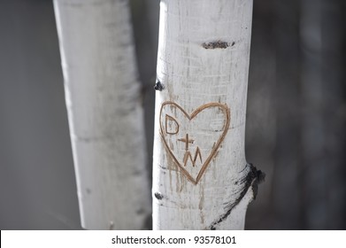 initials and heart carved into tree