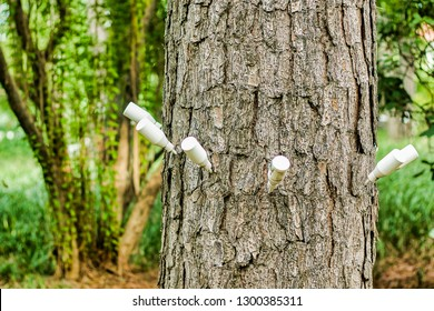 Injecting Treatment for Tree to save trees, Save tree Save planet,injection for tree, close shot, tree plantation,save the earth,