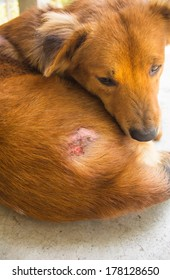 Injured after fight with other dog