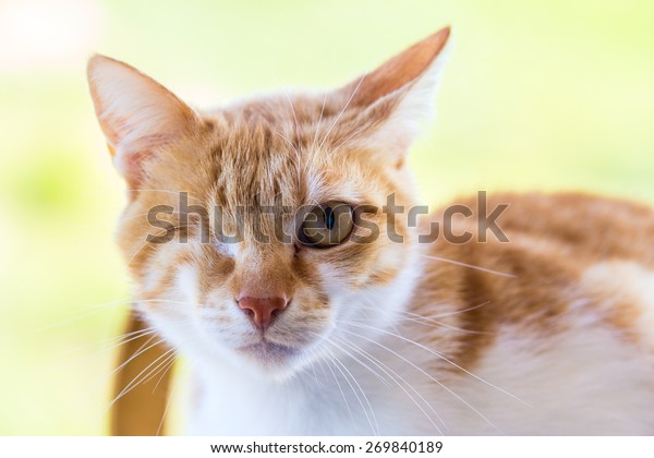 Injured cat with only one eye