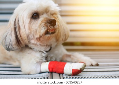 Dog Injured Images Stock Photos Vectors Shutterstock