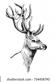 Ink illustration of a deer