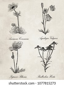 Ink on paper botanical set with scientific plant names