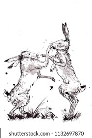 Ink sketch of two hares fighting. A traditional sketch of two march hares fighting. female hare fighting off a male hare during mating season. loose and artistic render of fighting hares.