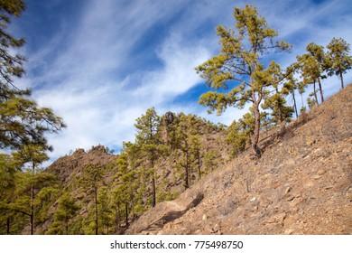 Inland Gran Canaria, Nature reserve Pilancones, sunny day in December