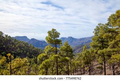 Inland Gran Canaria, Nature reserve Pilancones, sunny day in Decembe