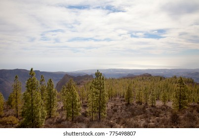 Inland Gran Canaria, Nature reserve Pilancones, sunny day in December, view over treetops towards Dunes of Maspalomas