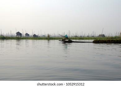 INLE LAKE, MYANMAR - MAR 1, 2015 - Famer collects lake grass seaweed to fertilize his floating garden on  Inle Lake,  Myanmar (Burma)