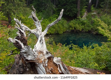 An inlet of Clearlake, Oregon with fallen tree in foreground