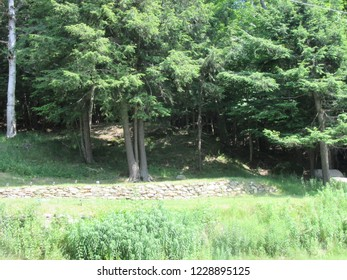 Inlet, NY/USA - July 1, 2018: Tranquil view of the woods in summer. A lone white birch tree stands off to the side.