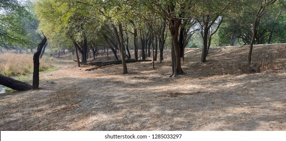 Inner scenes of forest in Sultanpur Bird sanctuary, Gurugram