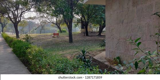 Inner scenes of forest in Sultanpur Bird sanctuary, Gurugram, India on 21 Jan 2019