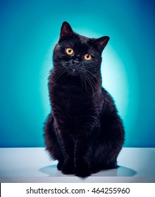 Innocent Looking Black Cat On A Blue Background