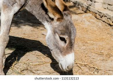 an innocent sad donkey in an animal farm