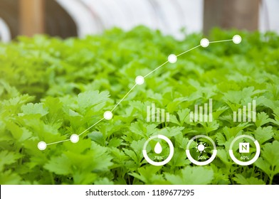 Innovation technology, Agriculture management, Technology concept in coriander greenhouse, Internet of things, Smart farm technology for detection and control system, Growth rate of plant