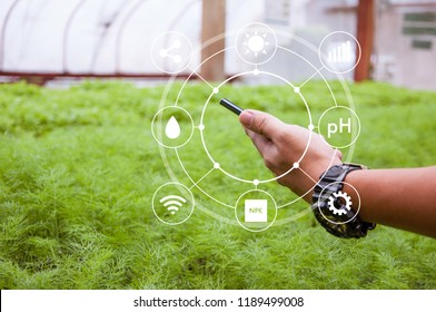 Innovation technology for smart farm system, Agriculture management, Hand holding smartphone with smart technology concept in coriander greenhouse, Internet of things, IoT