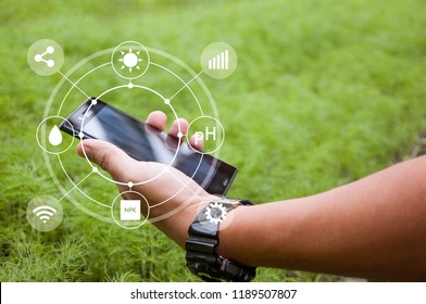 Innovation technology for smart farm system, Agriculture management, Hand holding smartphone with smart technology concept in coriander greenhouse, Internet of things, Controlling and detecting crops