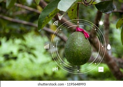 Innovation technology for smart farm system, Agriculture management, Avocado tomato farm, Internet of things, Future food