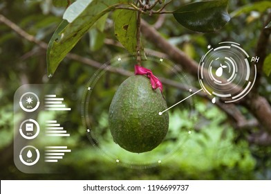 Innovation technology for smart farm system, Agriculture management, Avocado tree, Future food